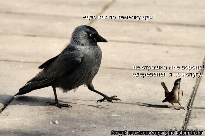 Котоматрица: -щас как по темечку дам! не страшна мне ворона!  одеревенел я ..с испугу..