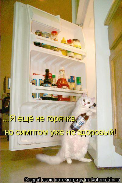 Котоматрица: ...Я ещё не горячка, но симптом уже не здоровый!