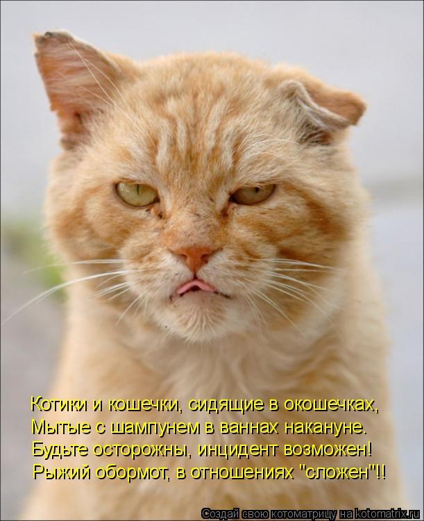 Котоматрица: Котики и кошечки, сидящие в окошечках, Мытые с шампунем в ваннах накануне.  Будьте осторожны, инцидент возможен! Рыжий обормот, в отношениях