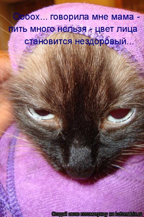 Котоматрица: Оооох... говорила мне мама -  пить много нельзя - цвет лица  становится нездоровый...