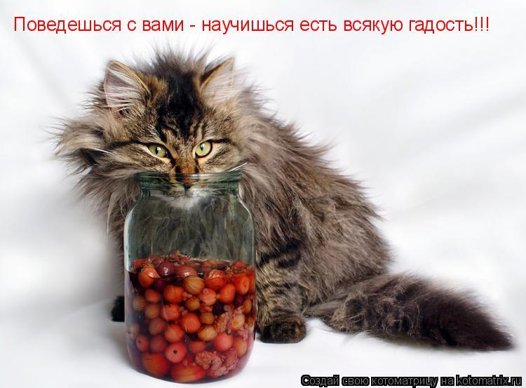 Котоматрица: Поведешься с вами - научишься есть всякую гадость!!!