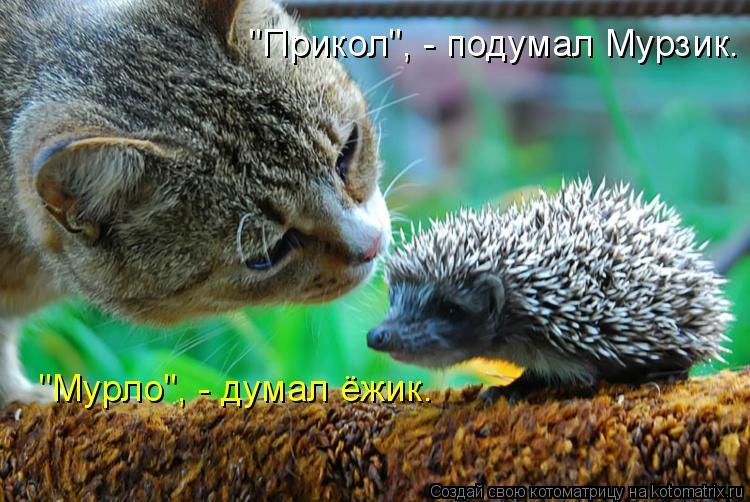 "Котоматрица: ""Прикол"", - подумал Мурзик. ""Мурло"", - думал ёжик."