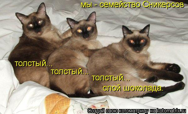 Котоматрица: толстый... толстый... толстый... слой шоколада. мы - семейство Сникерсов