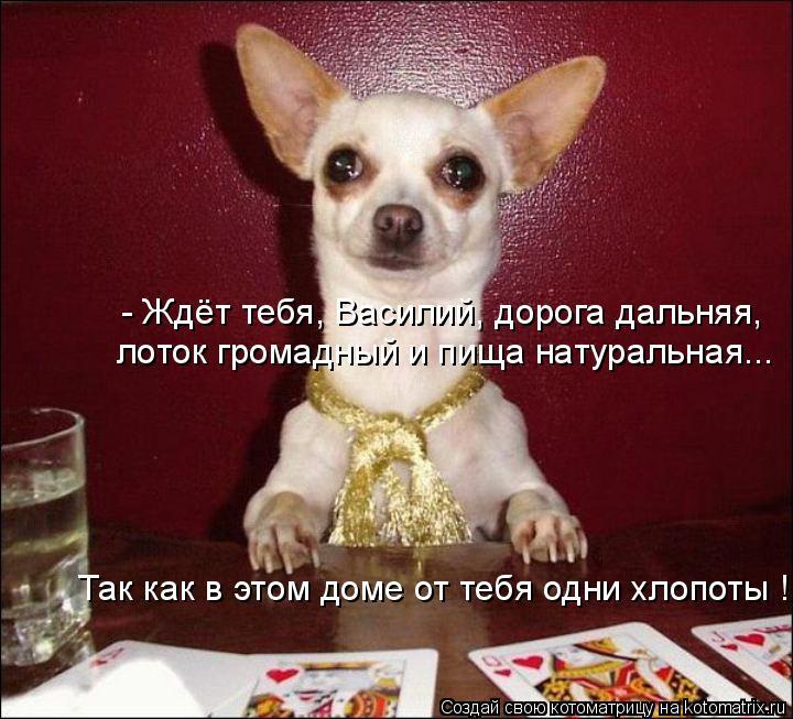 Котоматрица: - Ждёт тебя, Василий, дорога дальняя,  лоток громадный и пища натуральная... Так как в этом доме от тебя одни хлопоты !
