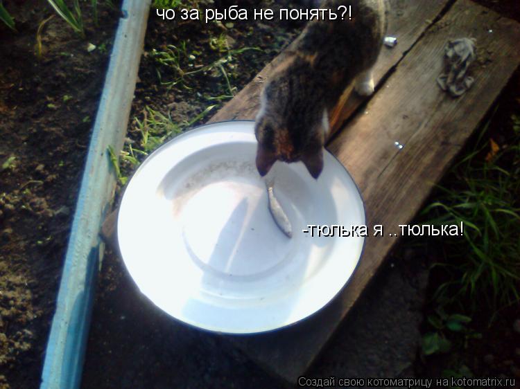 Котоматрица: чо за рыба не понять?! -тюлька я ..тюлька!