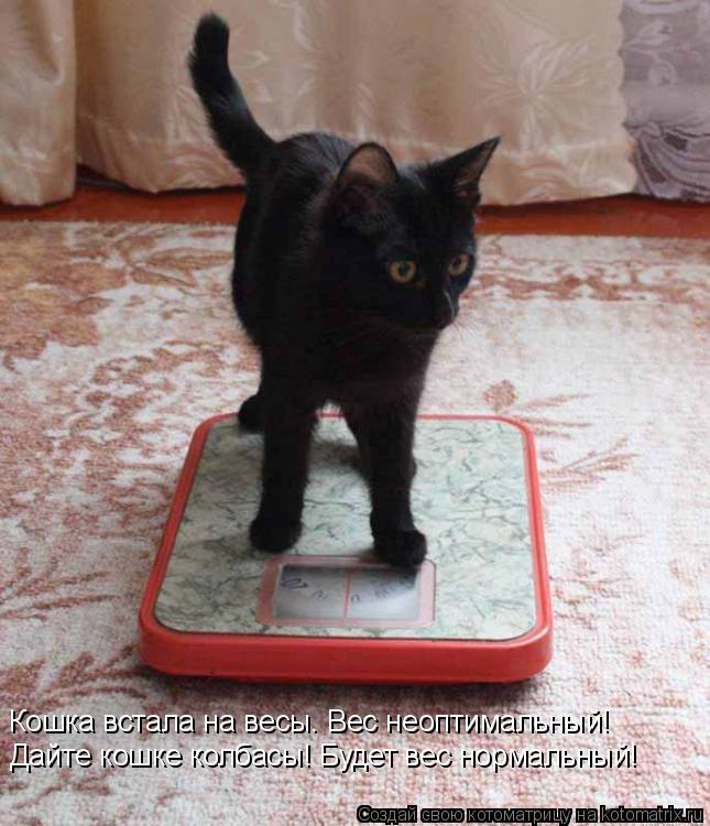 Котоматрица: Кошка встала на весы. Вес неоптимальный! Дайте кошке колбасы! Будет вес нормальный!