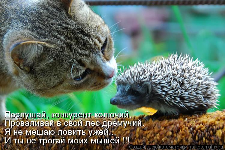 Котоматрица: Проваливай в свой лес дремучий. Я не мешаю ловить ужей... И ты не трогай моих мышей !!! Послушай, конкурент колючий,