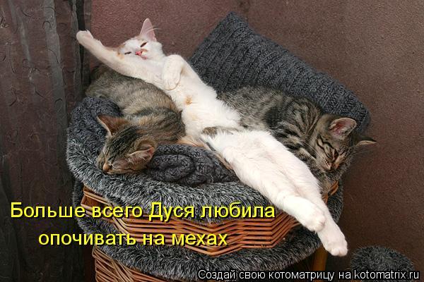 Котоматрица: Больше всего Дуся любила опочивать на мехах