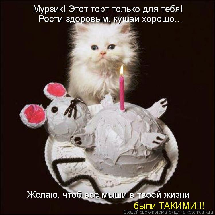 Котоматрица: Мурзик! Этот торт только для тебя! Рости здоровым, кушай хорошо... Желаю, чтоб все мыши в твоей жизни были ТАКИМИ!!!