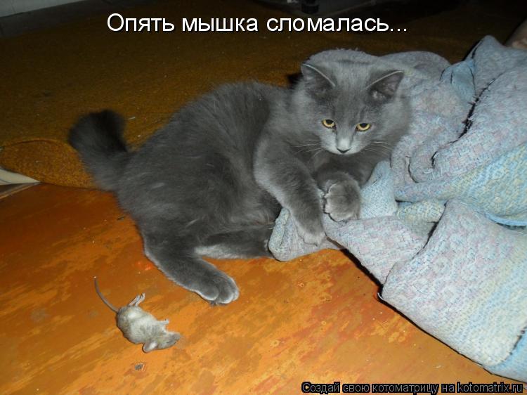 Котоматрица: Опять мышка сломалась...