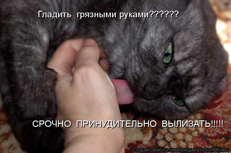 Котоматрица: Гладить  грязными руками?????? Гладить  грязными руками?????? СРОЧНО  ПРИНУДИТЕЛЬНО  ВЫЛИЗАТЬ!!!!!