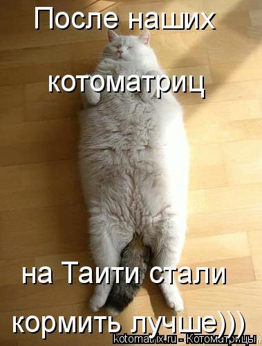 Котоматрица: котоматриц кормить лучше))) на Таити стали После наших