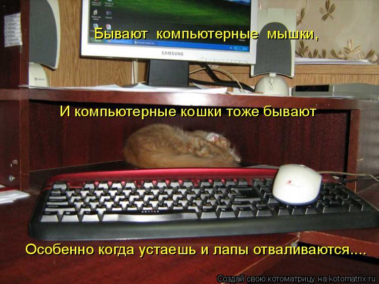 Котоматрица: Бывают  компьютерные  мышки, И компьютерные кошки тоже бывают Особенно когда устаешь и лапы отваливаются....