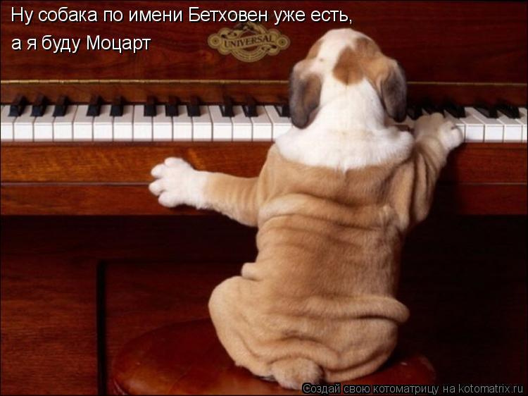Котоматрица: Ну собака по имени Бетховен уже есть, а я буду Моцарт