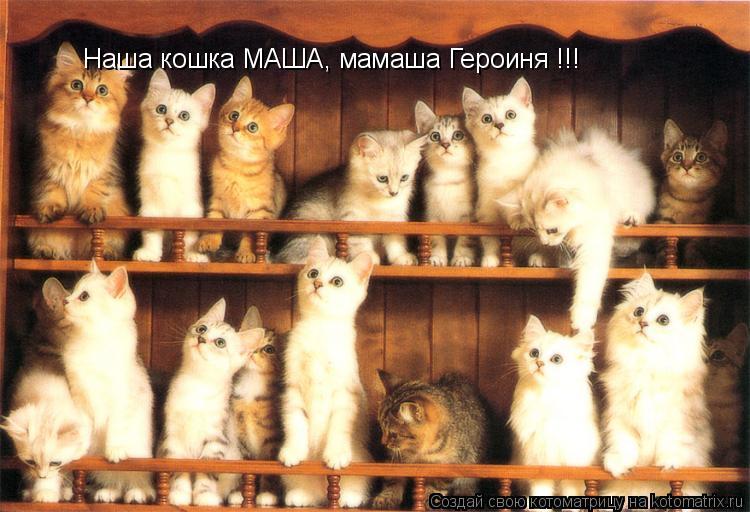Котоматрица: Наша кошка МАША, мамаша Героиня !!!