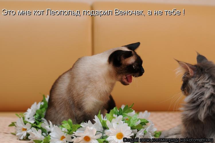 Котоматрица: Это мне кот Леопольд подарил Веночек, а не тебе !