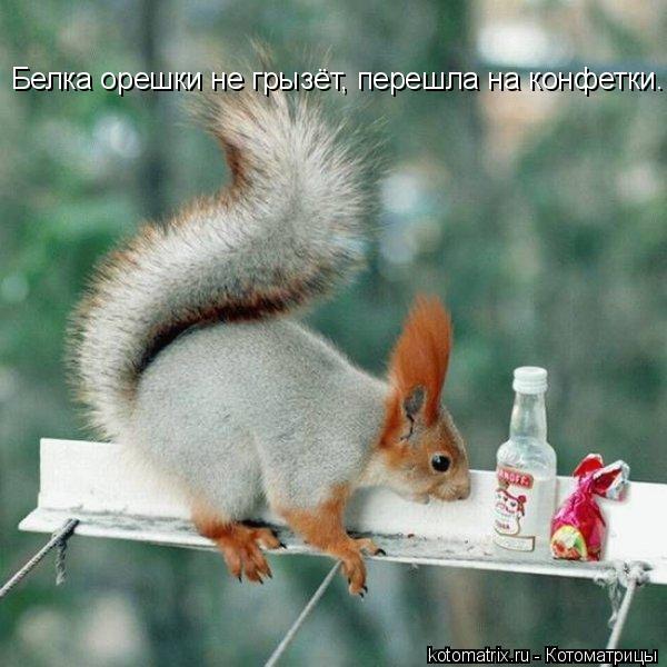 Котоматрица: Белка орешки не грызёт, перешла на конфетки.
