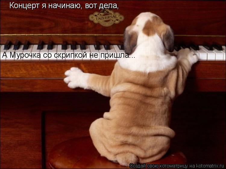 Котоматрица: Концерт я начинаю, вот дела, А Мурочка со скрипкой не пришла...