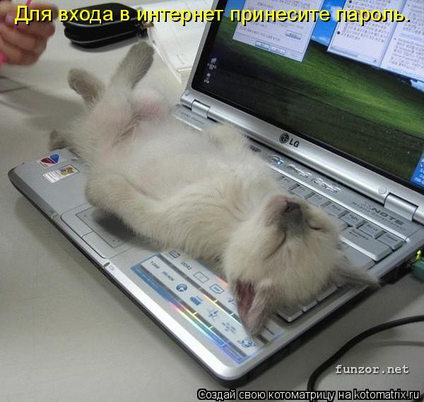 Котоматрица: Для входа в интернет принесите пароль.