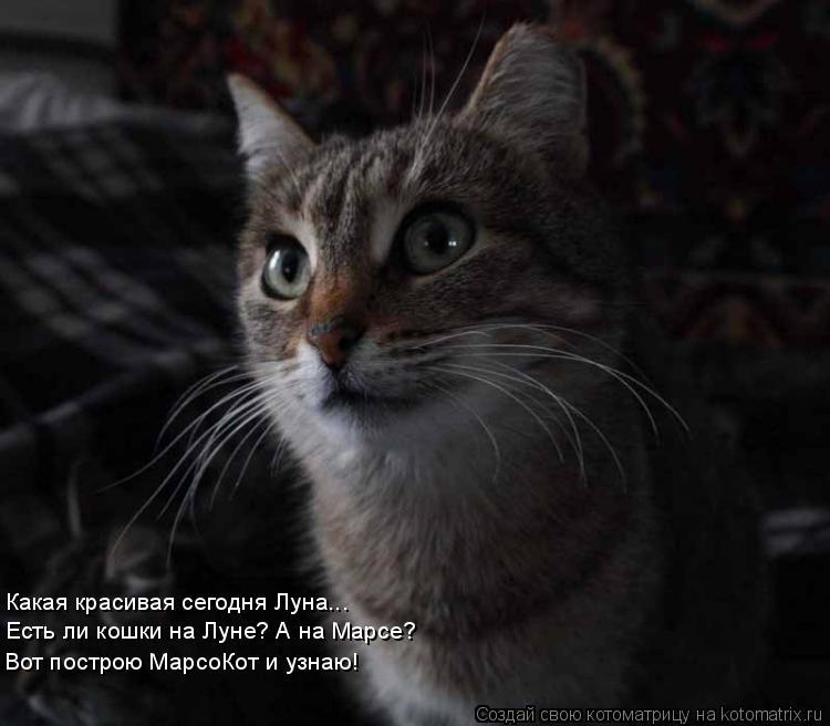 Котоматрица: Какая красивая сегодня Луна... Есть ли кошки на Луне? А на Марсе? Вот построю МарсоКот и узнаю!