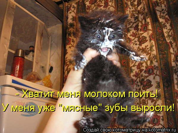 """Котоматрица: - Хватит меня молоком поить! У меня уже """"мясные"""" зубы выросли!"""