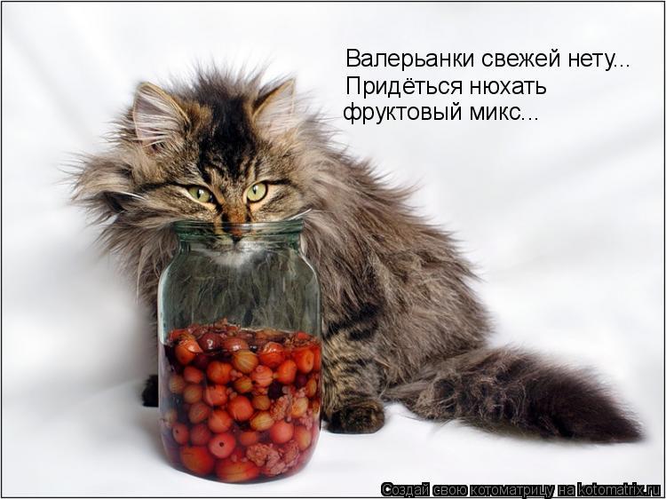 Котоматрица: Валерьанки свежей нету... Придёться нюхать  фруктовый микс...