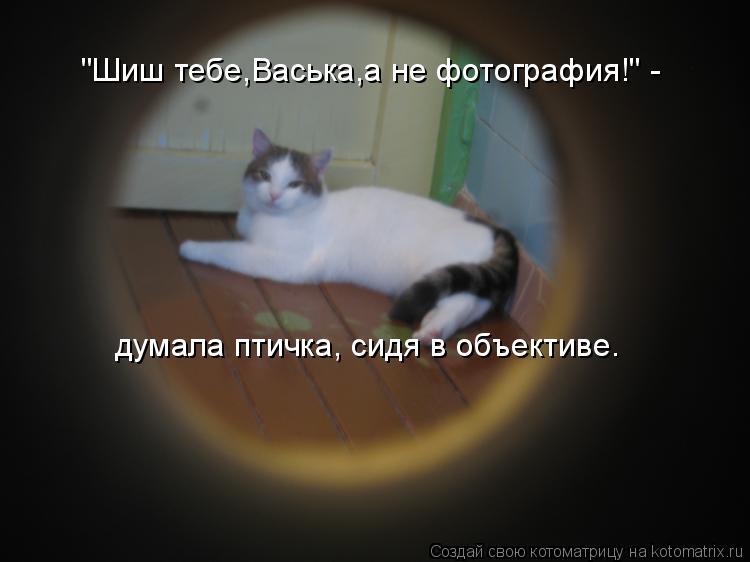 """""""Шиш тебе,Васька,а не фотография!"""" - думала птичка, сидя в объективе."""