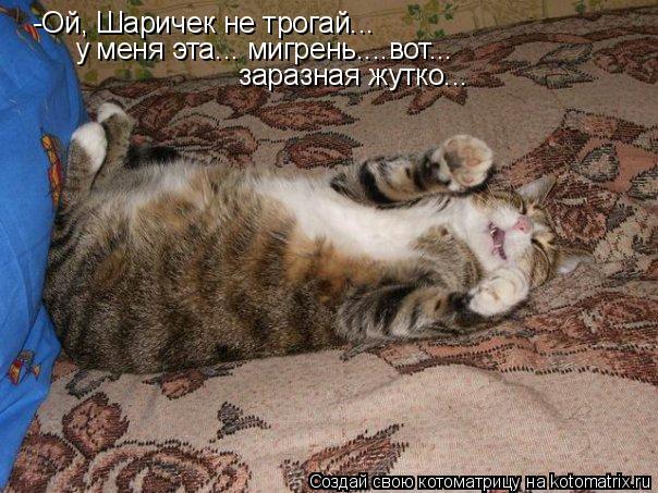 Котоматрица - -Ой, Шаричек не трогай... у меня эта... мигрень....вот... заразная жут