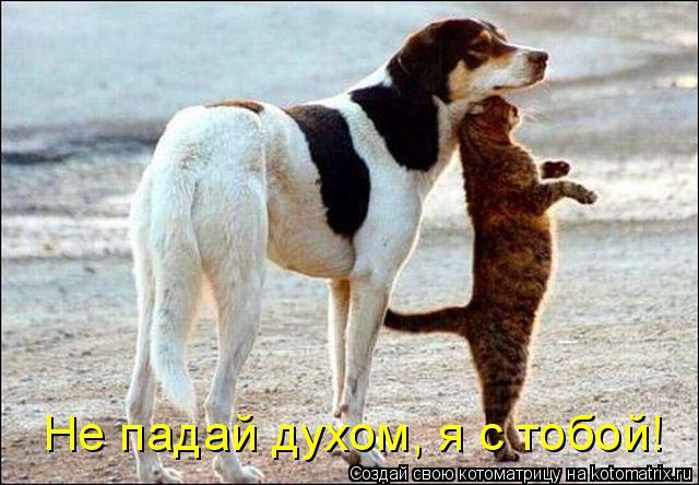 Котоматрица: Не падай духом, я с тобой!