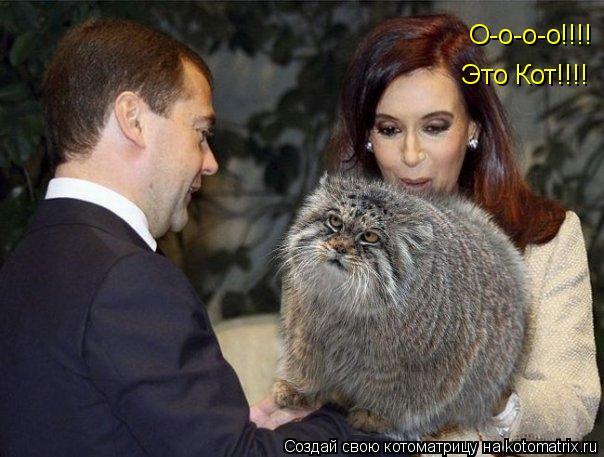 Котоматрица: О-о-о-о!!!! Это Кот!!!!