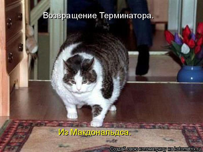 http://kotomatrix.ru/images/lolz/2011/01/24/801545.jpg