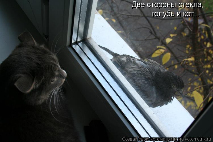 Котоматрица: Две стороны стекла, голубь и кот...