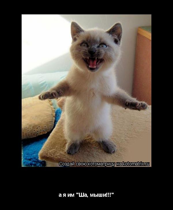 "Котоматрица: а я им ""Ша, мыши!!!"" а я им ""Ша, мыши!!!"""