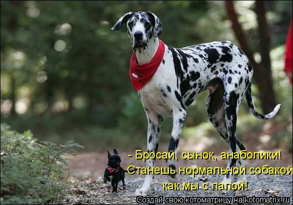 Котоматрица - - Бросай, сынок, анаболики!  Станешь нормальной собакой, как мы с папо