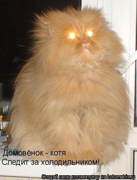 Котоматрица: Домовёнок - котя Следит за холодильником!