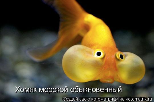Котоматрица: Хомяк морской обыкновенный