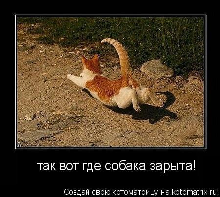 Котоматрица: так вот где собака зарыта!