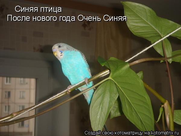 Котоматрица: Синяя птица После нового года Очень Синяя