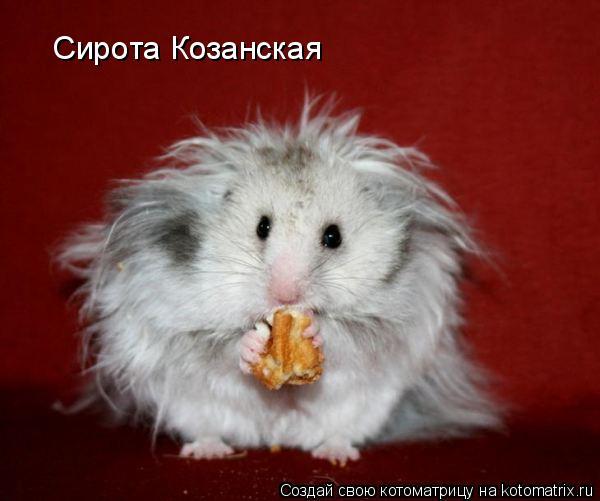 Котоматрица: Сирота Козанская