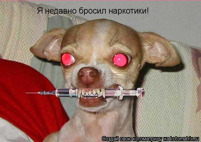 Котоматрица: Я недавно бросил наркотики!