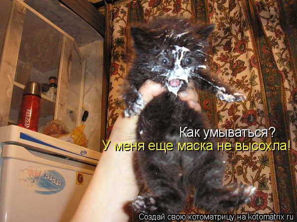 Котоматрица: Как умываться? У меня еще маска не высохла!