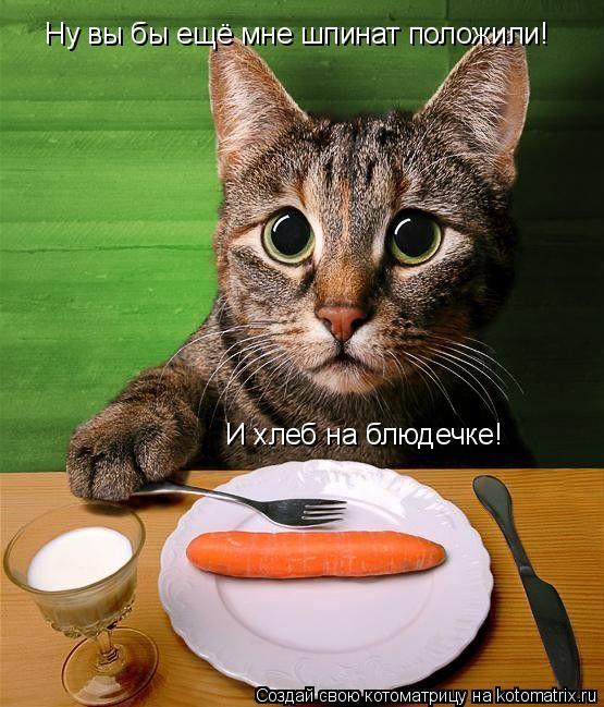 Котоматрица: Ну вы бы ещё мне шпинат положили! И хлеб на блюдечке!