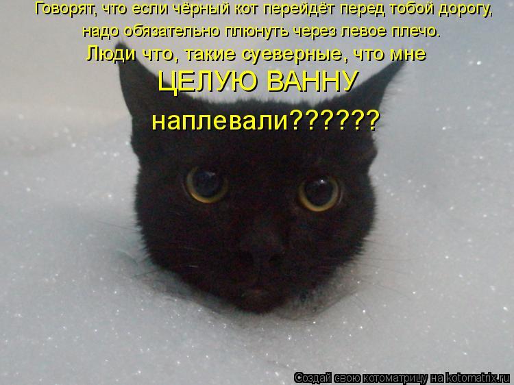 черный кот песня текст
