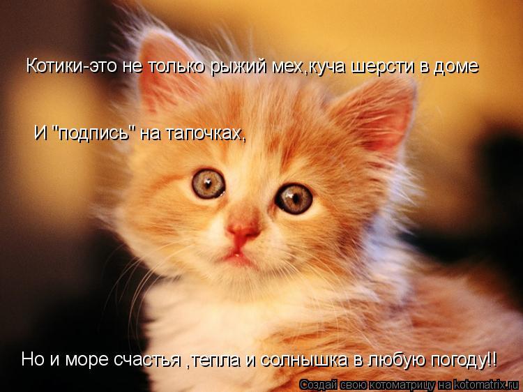 Котики-это не только рыжий мех,куча шерсти в доме Но и море счастья ,т