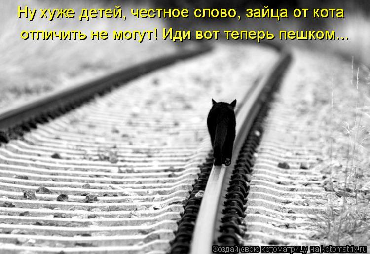 Котоматрица: Ну хуже детей, честное слово, зайца от кота  отличить не могут! Иди вот теперь пешком...