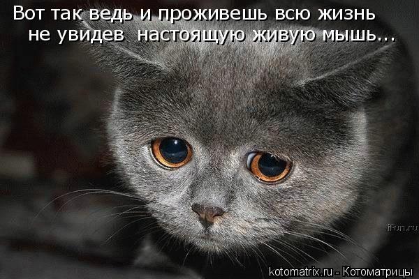 Вот так ведь и проживешь всю жизнь не увидев  настоящую живую мышь...