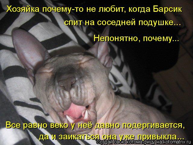 Котоматрица: Хозяйка почему-то не любит, когда Барсик  спит на соседней подушке...  Непонятно, почему...  Все равно веко у неё давно подергивается,  да и заик