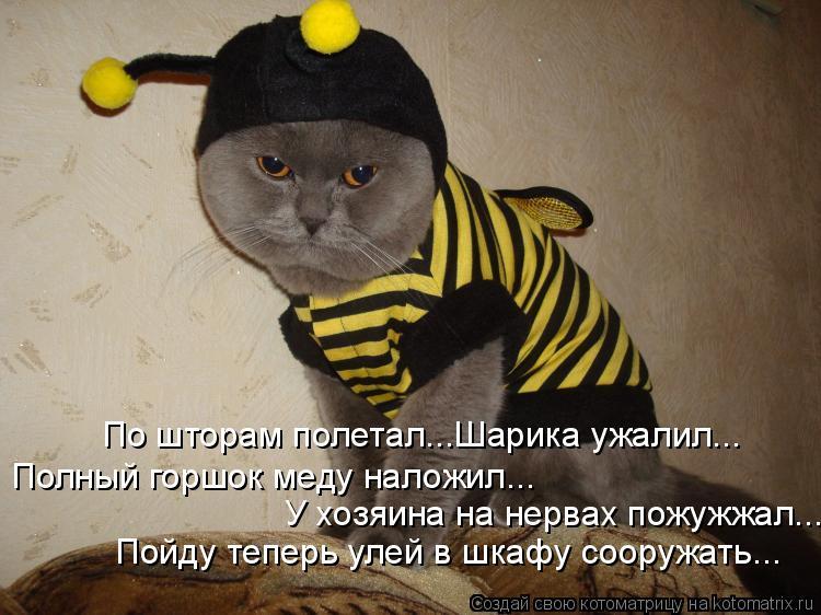Котоматрица: По шторам полетал...Шарика ужалил... Полный горшок меду наложил... У хозяина на нервах пожужжал... Пойду теперь улей в шкафу сооружать...
