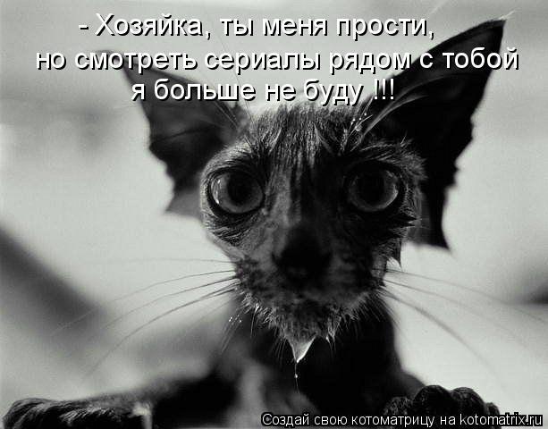 Котоматрица - - Хозяйка, ты меня прости, я больше не буду !!! но смотреть сериалы ря