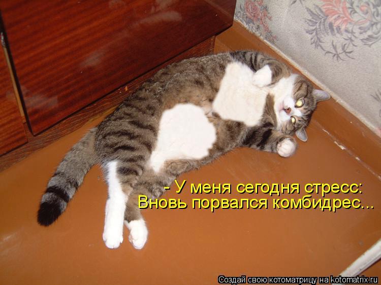 - У меня сегодня стресс: Вновь порвался комбидрес...